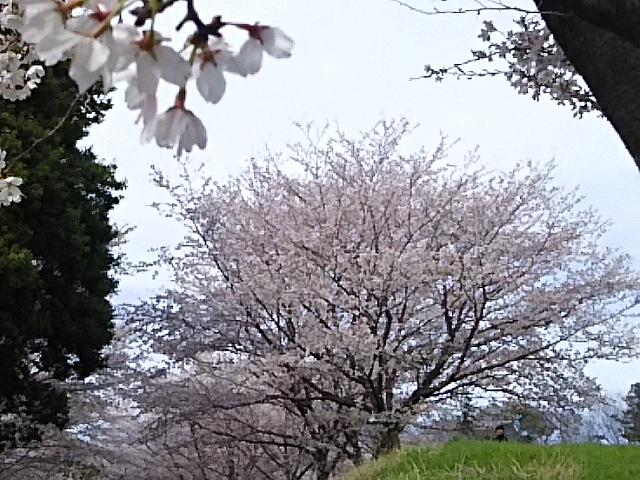 2017-04-16T16:34:49.JPG